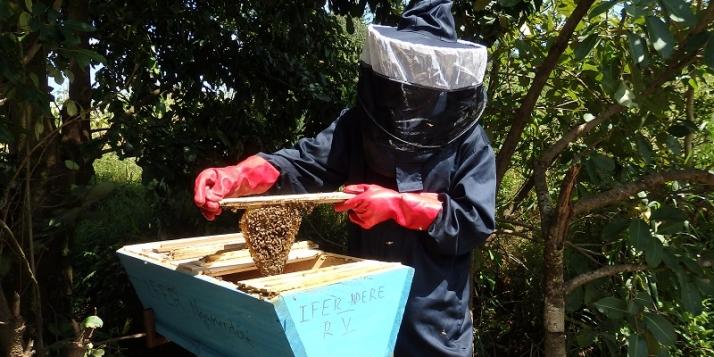 Ruche kényane du rucher pédagogique IFER-Marza - Région de l'Adamaoua (Cameroun) (c) Miel Maya