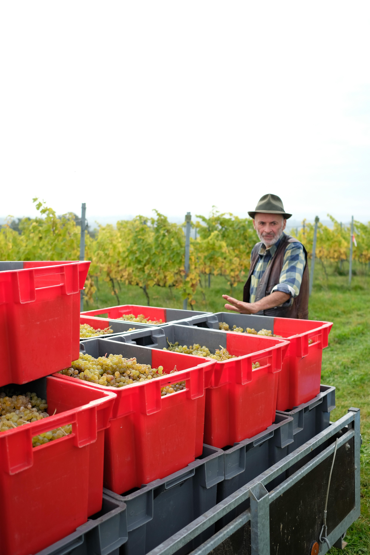 Vendanges à la coopérative Vin de Liège (c) WBT - Olivier Legardien