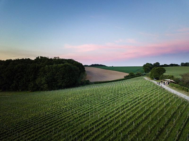 Vignoble du Château de Bousval (c) WBT