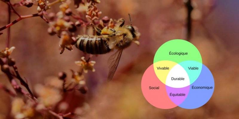 Webinaire « L'apiculture durable, au Nord et au Sud »   © Miel Maya Honing asbl