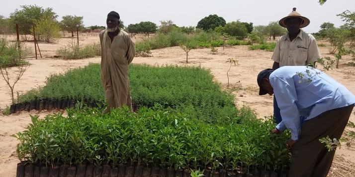 Planter des arbres au Burkina Faso pour compenser son empreinte carbone, une initiative de l'ADEPS en partenariat avec l'APEFE - cliquer pour agrandir