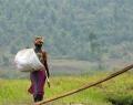 Rwanda © Dominique Pirnay - Woush