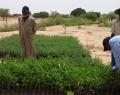 Planter des arbres au Burkina Faso pour compenser son empreinte carbone, une initiative de l'ADEPS en partenariat avec l'APEFE