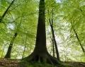 Appel à projets de la Campagne de volontariat pour le patrimoine mondial 2020